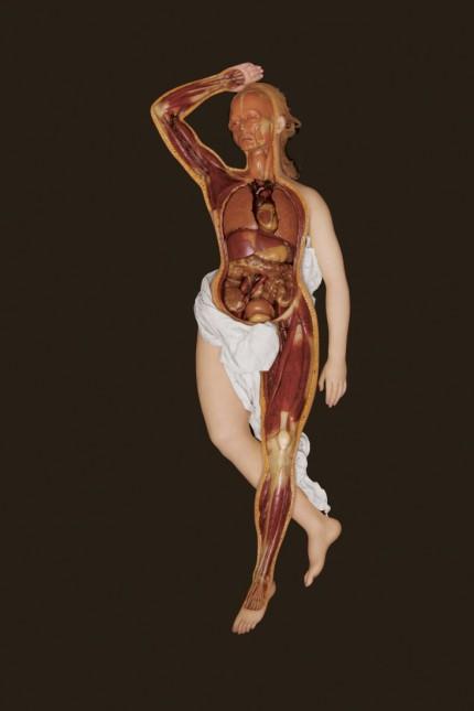 Anatomical Venus/Anatomische Venus