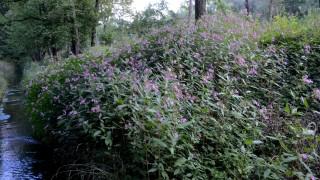Stadt Dachau Fremde Pflanzen