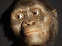 Lucy, Australopithecus afarensis