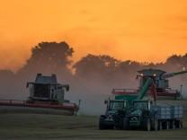 Große Ertragseinbußen bei Getreide