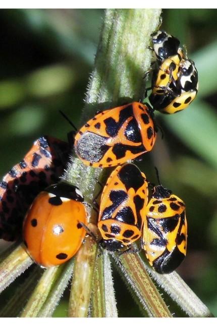 Insekten im Haarer Forst