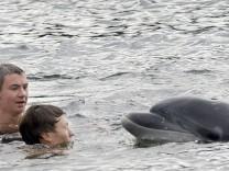 Delfin in Kieler Förde