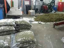 Fahnder finden eine halbe Tonne Marihuana