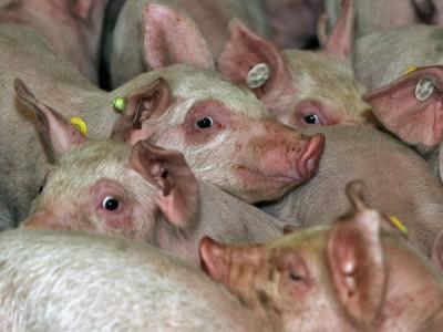 Tierschutz: Die Natur schlägt zurück