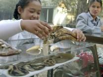 YOUNG GIRL SELLS RARE ANIMAL PARTS AT A MYANMAR MARKET