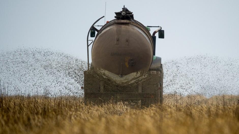 Gülle in der Landwirtschaft