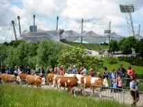 Almauftrieb auf den Münchner Olympiaberg, 2016