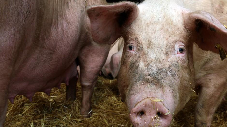 Tiere aus Würmer behandelt