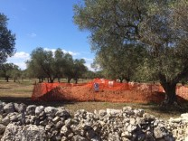 A site for the construction of a pipeline is seen in a grove of century-old olive trees in the southern Italian village of Melendugno
