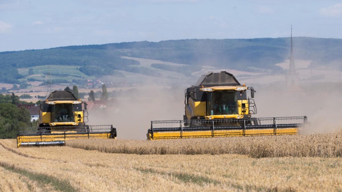 Landwirtschaft verursacht massenhaftes Tiersterben