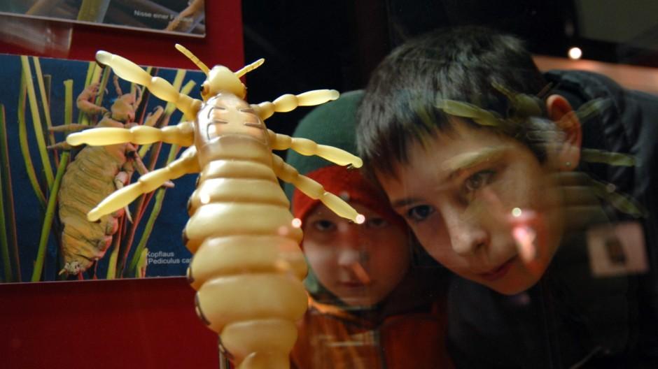 """Parasiten-Ausstellung im Museum """"Mensch und Natur"""", 2007"""