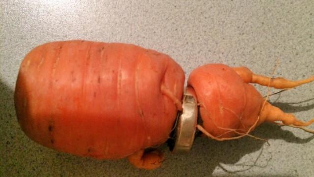 Besondere Ernte: Möhre befördert verlorenen Ehering zutage