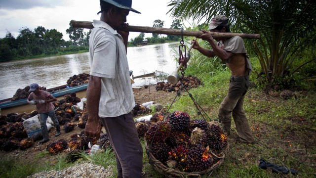 Deforestation In Sumatra Continues