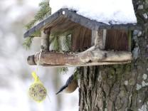 Planegg: Maria Eich Grundstück - Kleiber am Vogelhäuschen