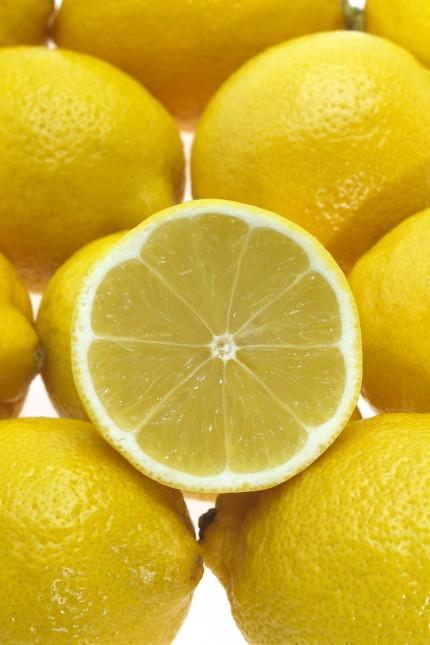 Yellow Lemons citrus limonum PUBLICATIONxINxGERxSUIxAUTxONLY