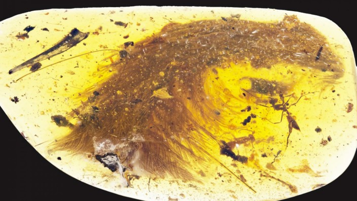 Preserved Dinosaur Tail in Amber