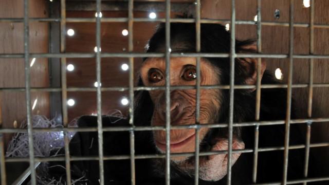 Tierschutz Tierschutz