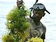 Bio-Treibstoff, Biosprit aus Algen