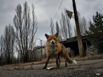 Neue Fotografie_Tschernobyl