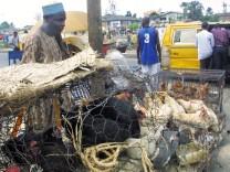 Geflügelhändler in Nigeria, erstes Autreten der Vogelgrippe in Afrika, 2006