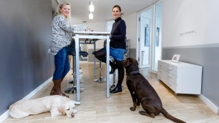Klare Absprachen und viel Erziehung: So klappt's mit dem Bürohund
