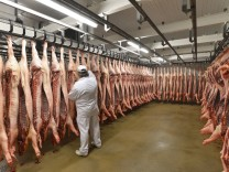 Butcher checking sides of pork in cold store of a slaughterhouse model released Symbolfoto property