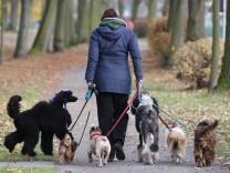 """Ortswechsel bei Scheidung für Hunde ´unzumutbar"""""""