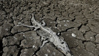 The Wider Image: A slow death along the Pilcomayo River