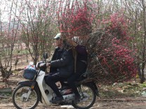 A couple transports peach blossom flowers in Hanoi