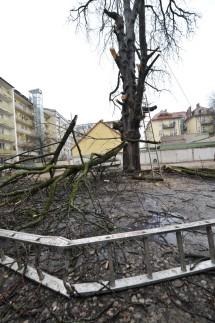 München Baumschutz-Initiative