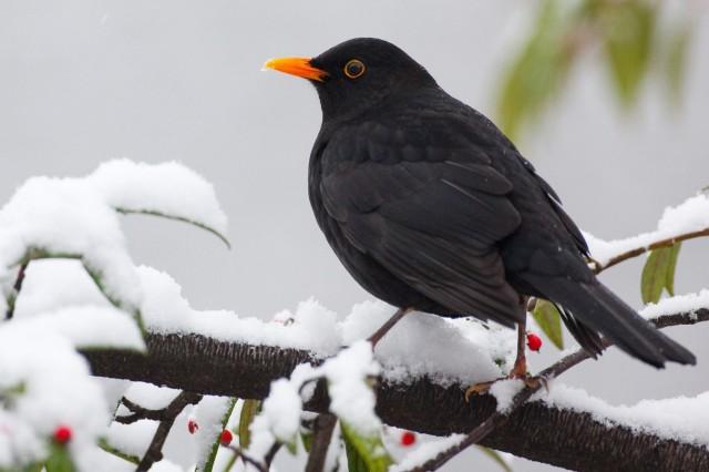 Vogelzählung in NRW