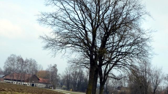 Dorfen Dorfen