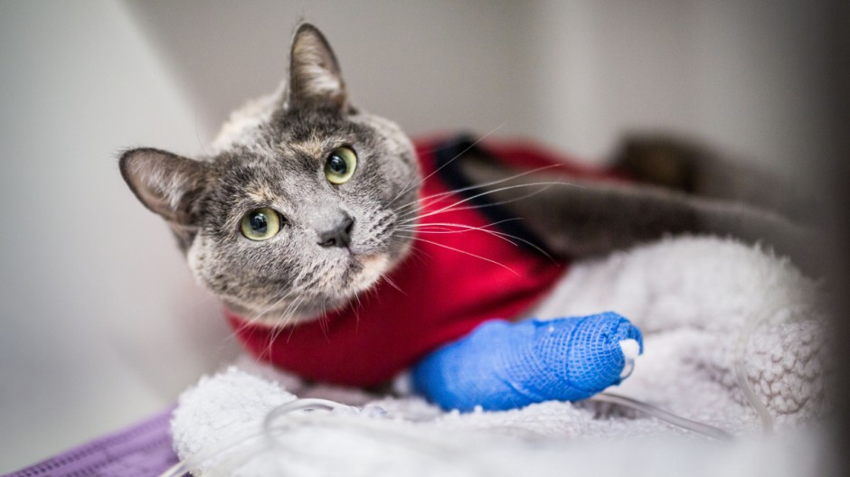 Den Liebling richtig absichern: Wann sich Tier-Versicherungen loh