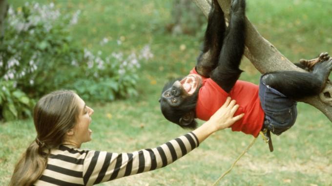 Wahrscheinlich fällt dieser Affe vor Lachen bald vom Ast. Trotzdem scheint er das Kitzeln zu genießen. (Foto: Science Source/Getty Images)