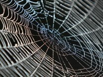 A spider-web in the Kosovo village of Acareva