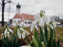 Frühlingsboten Eichenau