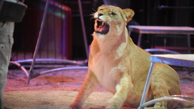 Zoo Zirkustiere