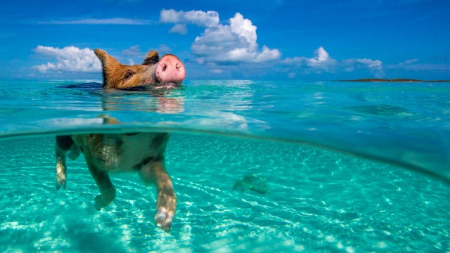 May 7 2014 NASSAU ISLANDS BAHAMAS PADDLING up to 300 feet from shore in 24 degrees Centigrade w