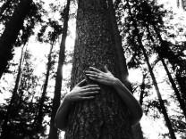 Bäume im Sollner Wald
