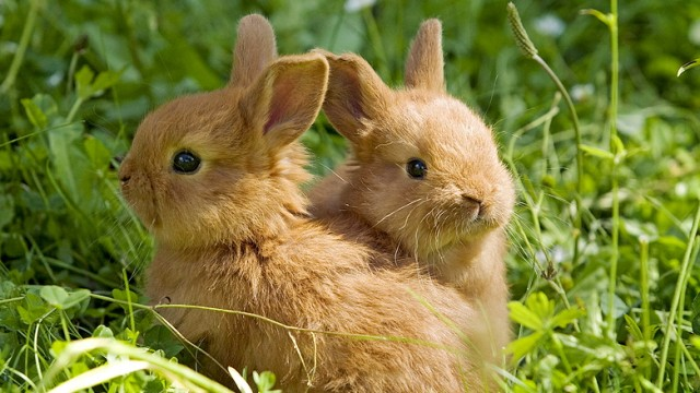 Tierschutz Kaninchen