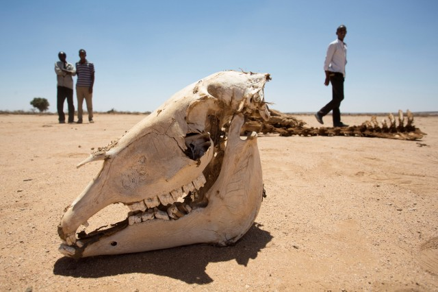 People walk near the carcass of a domestic animal that died due to severe drought in Baligubadle village near Hargeisa