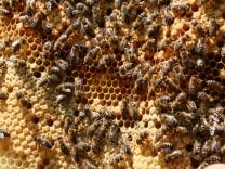 Bienenkugeln