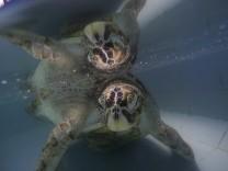 1000 Münzen im Bauch einer  Schildkröte