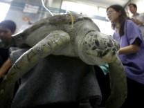 Schildkröte stirbt nach Not-OP