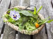 Basket of wild herbs and edible flowers PUBLICATIONxINxGERxSUIxAUTxHUNxONLY SARF03001; Wildkräuter