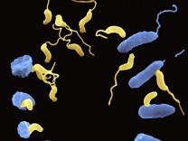 Räuberische Bakterien