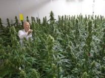 Cannabis Import Niederlande Rezept
