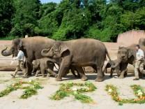 Taufe Elefant Zoo Hannover