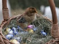 Ostern im Münchner Tierpark, 2007