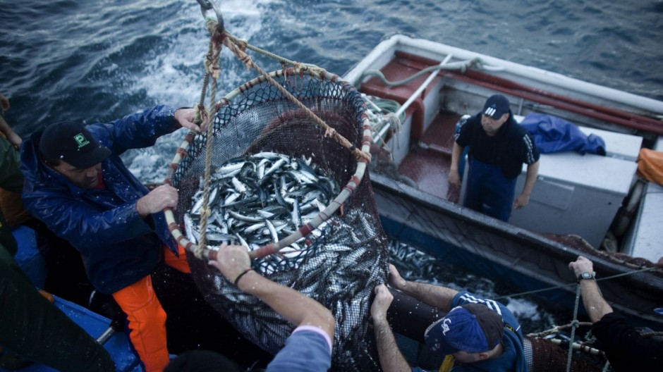 Fishermen, with the help of a crane, pull sardines onto a fishing boat using the purse seine fishing method in Matosinhos
